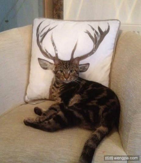 猫焕然一新!