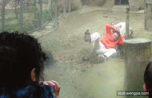 逛野生动物园切勿大意 盘点野生动物园猛兽咬死人事故