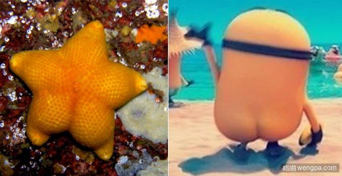 海星的屁股vs小黄人的屁股