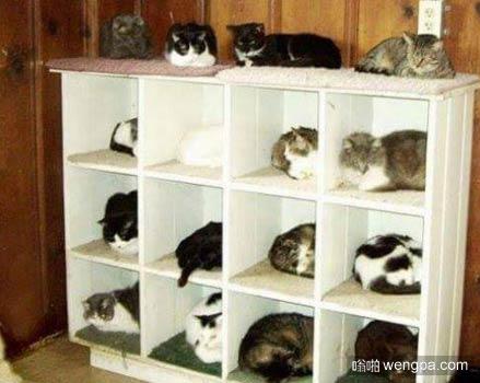 在宜家新买的柜子成了猫的公寓