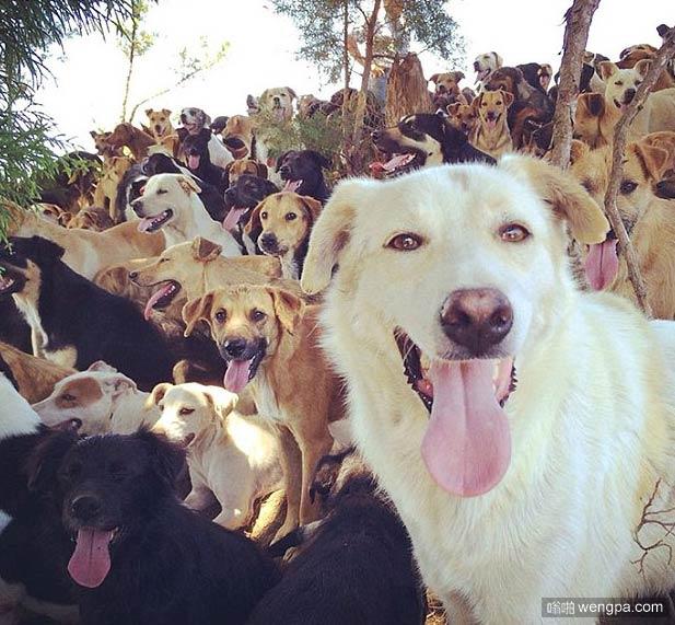 太壮观了!跟几百只狗狗遛弯 感受一下