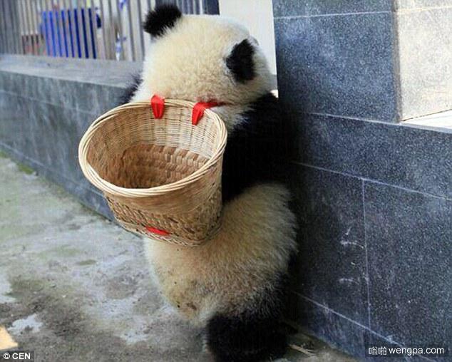 功夫熊猫阿宝小时候可爱萌宠照片曝光