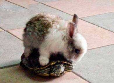 【搞笑段子】龟兔赛跑