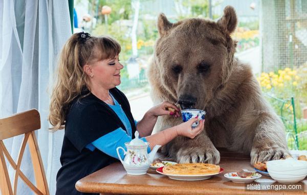 【视频】俄罗斯夫妇收养棕熊23年 同吃同住亲如一家