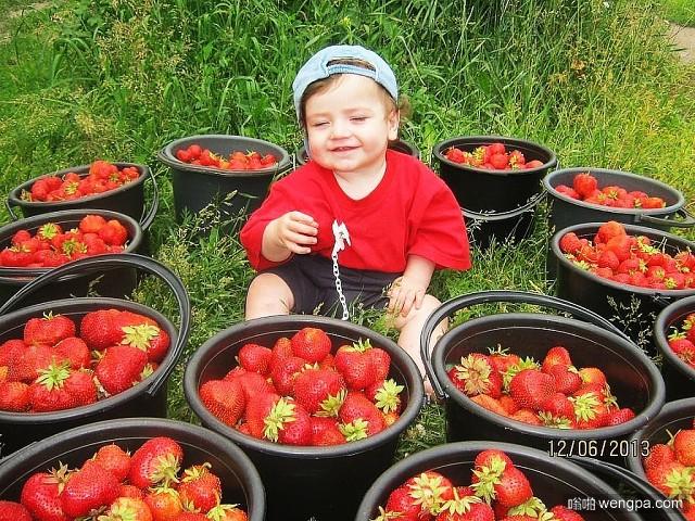 小孩草莓 AH,夏! 最亲爱的浆果-嗡啪网