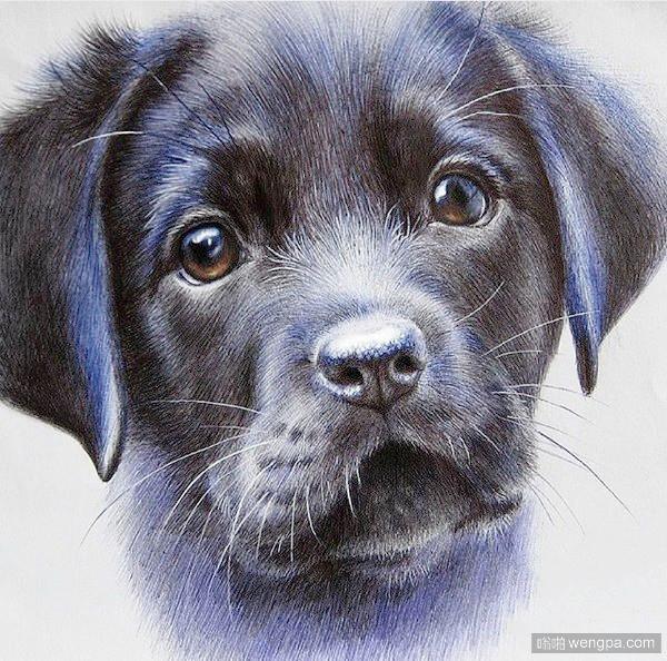 圆珠笔画的狗狗