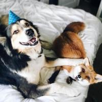 狗狗和快乐狐狸之间的友谊故事