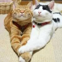 一组猫咪秀恩爱萌宠图片