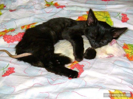 猫和老鼠中的汤姆和杰里终于在一起了