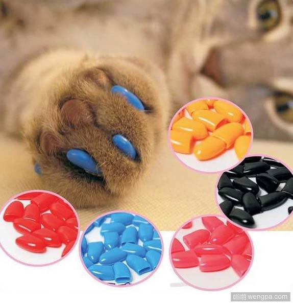 这些彩色爪盖可以保护你宠物的爪子