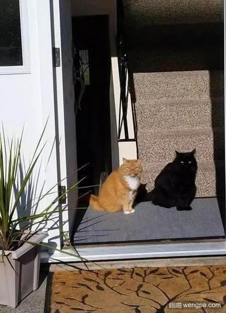 猫的投影,没毛病