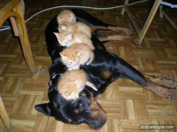 可怜的狗。 那双眼睛。是的,我是一个床垫。