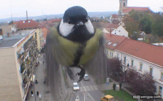 窗外飞来一只可爱的小鸟-嗡啪萌宠图片
