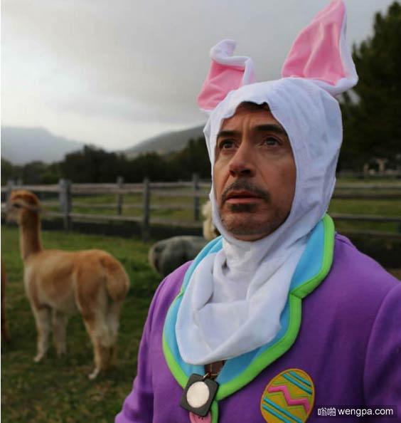钢铁侠兔子 罗伯特唐尼打扮成粉嫩兔女郎