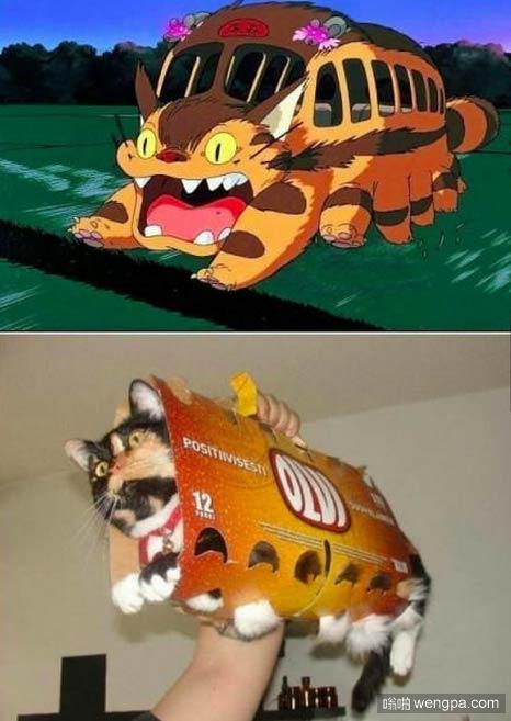 可爱小猫Cosplay-嗡啪萌宠图片
