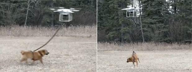 【视频】无人机遛狗 结果狗狗上天了