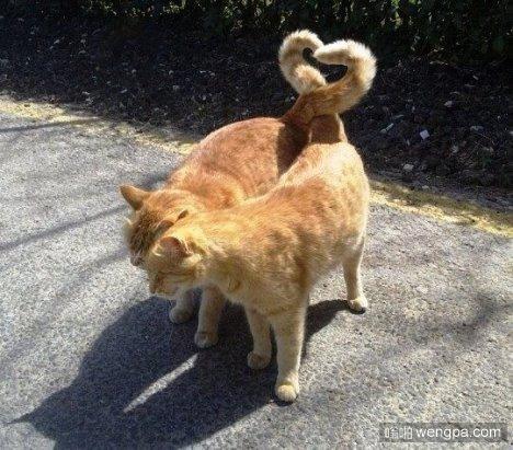 猫の爱情_猫萌宠图片-嗡啪萌宠图片