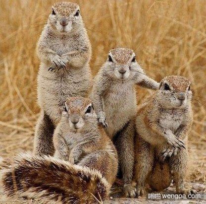 这些松鼠好像在拍自己最新推出的说唱专辑封面