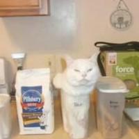 猫是有趣的 盘点二货猫猫搞笑图片