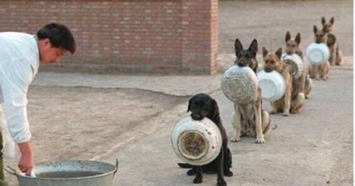 二货狗狗搞笑段子