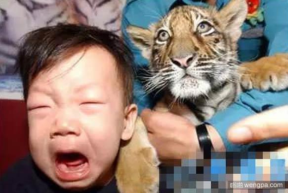 老虎一脸无辜:我没咬他~~