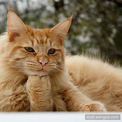 一组可爱小猫装深沉耍酷图片