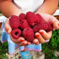 AH,夏! 最亲爱的浆果