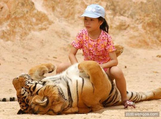 老虎很享受