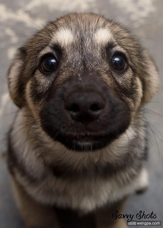 可爱小狗图片 只是以防万一你今天还没笑