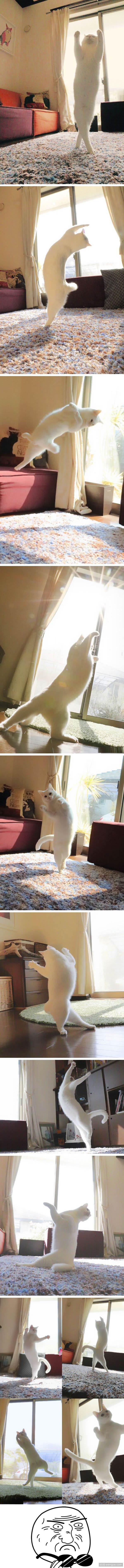 芭蕾舞猫独自在家练习舞步,没毛病