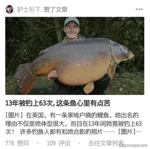 这条鱼心里苦 大鲤鱼13年被钓上来63次
