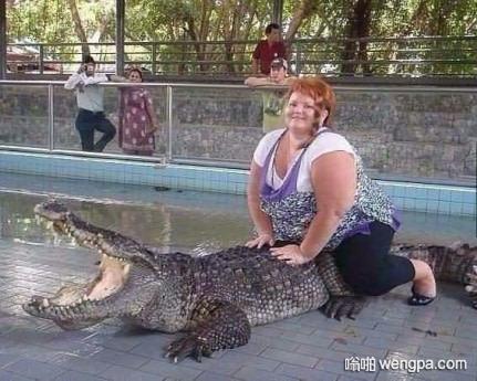 救命!鳄鱼也经不起胖子这么一下子