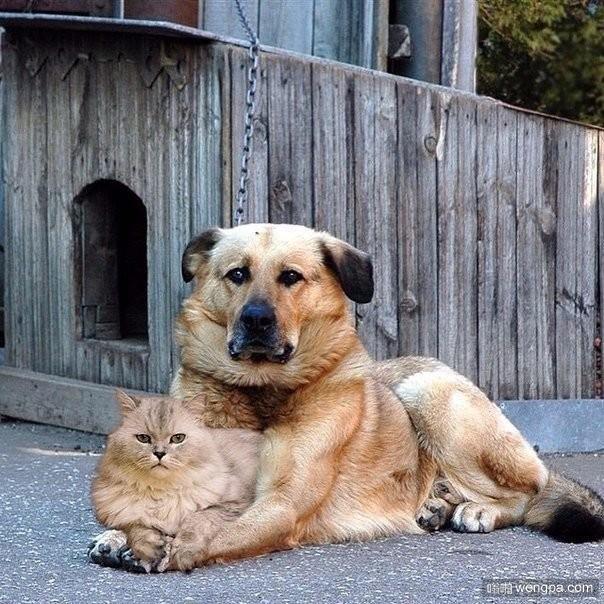 他保护她,她爱他 猫和狗的爱情-嗡啪萌宠图片