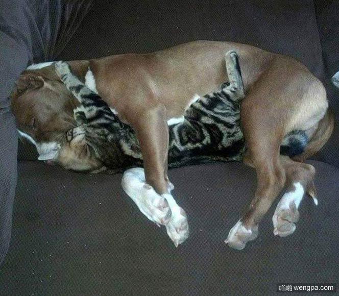它们就这样抱着睡了一晚上 什么也没有发生