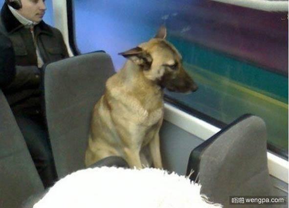 这狗占座6年 据说是在等它的主人-嗡啪网