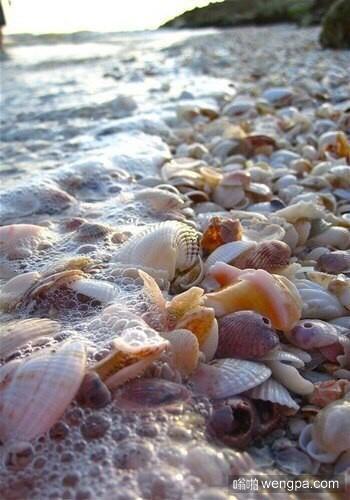 中国有这样的海滩么 充满贝壳的海滩