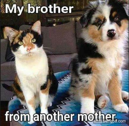 【猫和狗狗搞笑图片】同父异母的兄弟-嗡啪搞笑动物