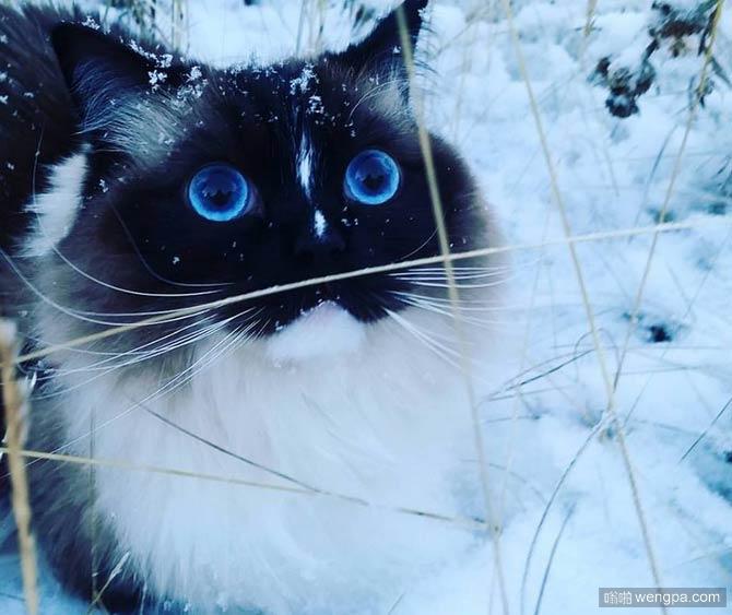 【萌宠图片】萌宠可爱猫猫图片