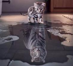 猫的倒影是老虎 相信自己