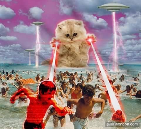 星球大战之喵星人入侵-嗡啪搞笑动物