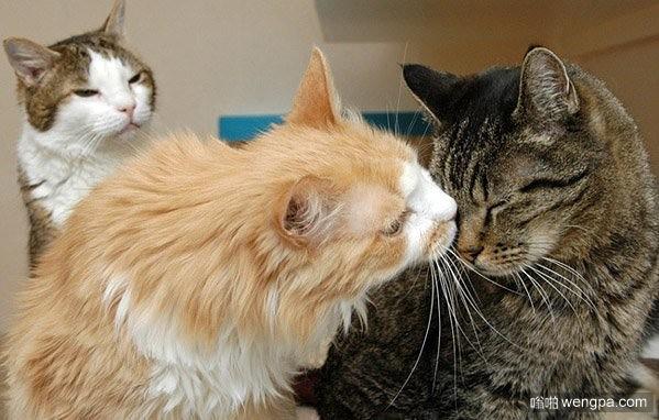 单身猫羡慕嫉妒恨的眼神