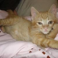 一波可爱小猫托腮摆pose的萌宠图片