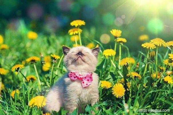 小猫享受夏天阳光