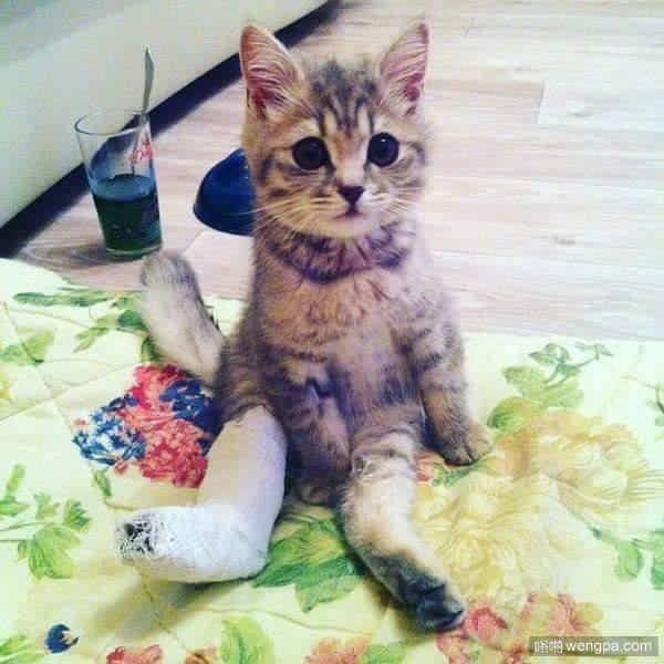 小猫居然也会崴脚了