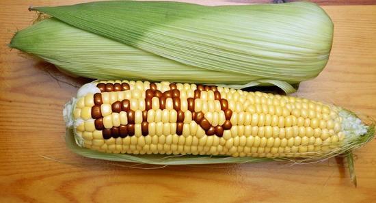 OMG 玉米长这样了