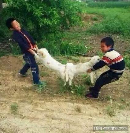 【狗狗交配搞笑图片】熊孩子好像明白了什么-嗡啪搞笑动物
