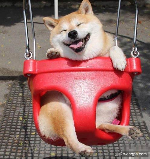 为什么那么多人喜欢日本狗