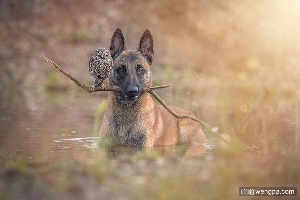 他是一个特立独行的狗,她是一只猫头鹰。谁不遵守游戏规则,它们将共同打击犯罪。