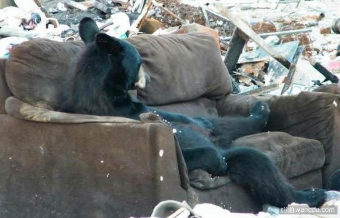 家里有沙发的生活_黑熊坐沙发搞笑图片-嗡啪搞笑动物