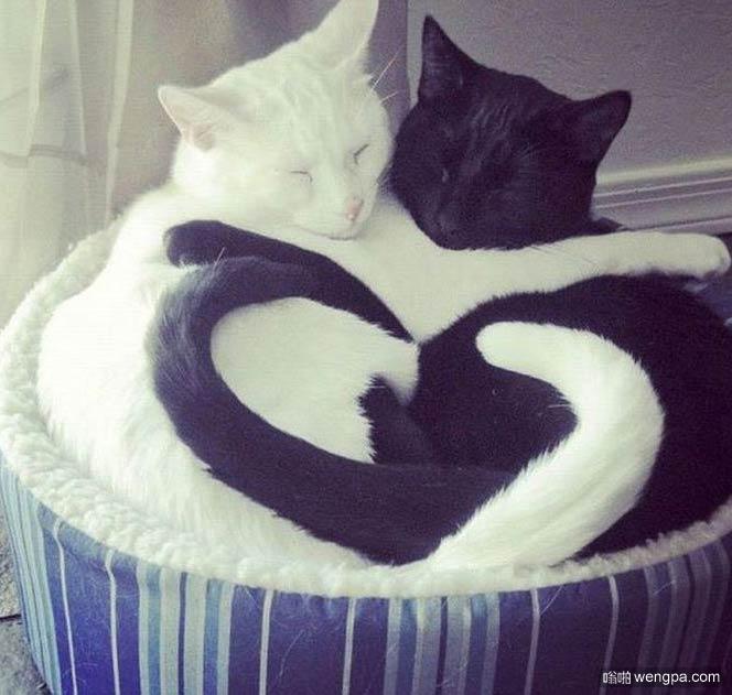 黑白 – 永远最可爱的猫